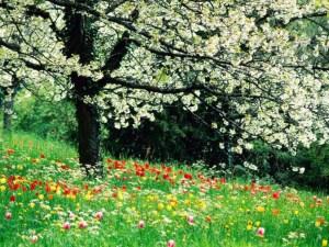 albero-e-prato-fiorito