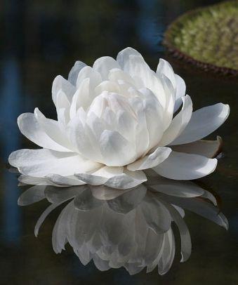 fiore bianco1